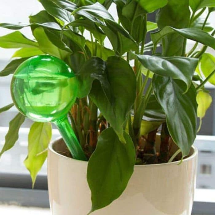 There are times when unfortunately we can't be there to care for our plants. How do you water plants when you're sick or on vacation, or on a work trip?  Click through NOW to check out these Ways To Water Plants When You're Away....