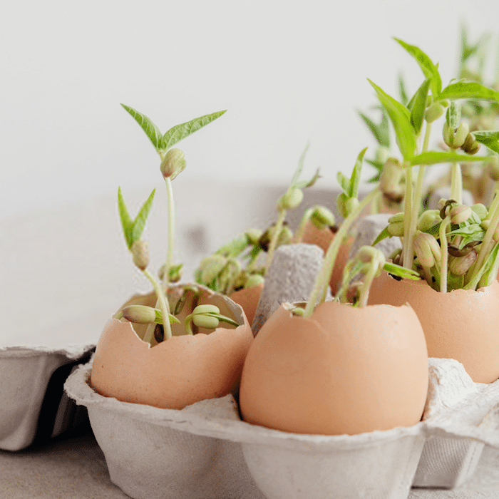 You don't have to spend a fortuen on fertilizers and pest control products to care for your plants.  Sometimes you just need to head to the kitchen.  Click through NOW to see how you can use egg shells in your garden...