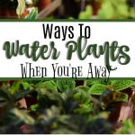 Ways To Water Plants When You're Away