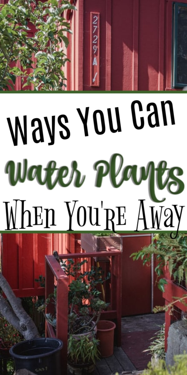 Ways To Water Your Plants When You're Away