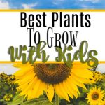Best Plants To Grow With Kids