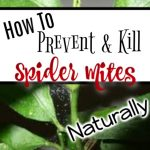 How to Deal with Spider Mites Naturally