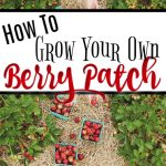 How To Grow Strawberries & Other Berries