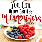 How to Grow Berries in Containers (3)