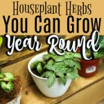 Houseplant Herbs To Grow Year Round (3)