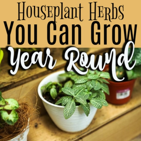 Houseplant Herbs To Grow Year Round