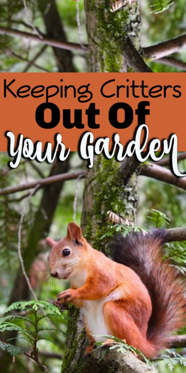 Critters will always find their way to your garden.  But there are things you can do to make them turn back and leave our hard work alone.  Click through NOW to see how to keep those pesky critters out of your home garden....