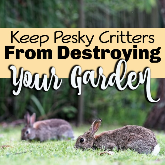 Keeping Critters Out Of The Garden
