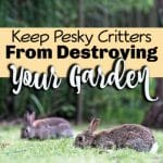 Keeping Critters Out Of The Garden (3)