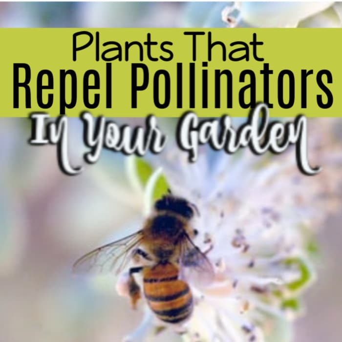 We need pollinators to visit our gardens so we need to make sure we aren't planting plants that will repel them.  Click through NOW to see a list of plants that may be telling pollinators they aren't welcome in your garden....