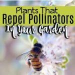 10 Plants That Repel Pollinators In Your Garden (4)