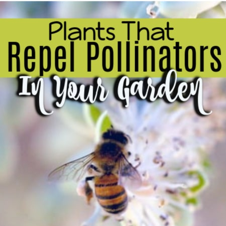 10 Plants That Repel Pollinators In Your Garden