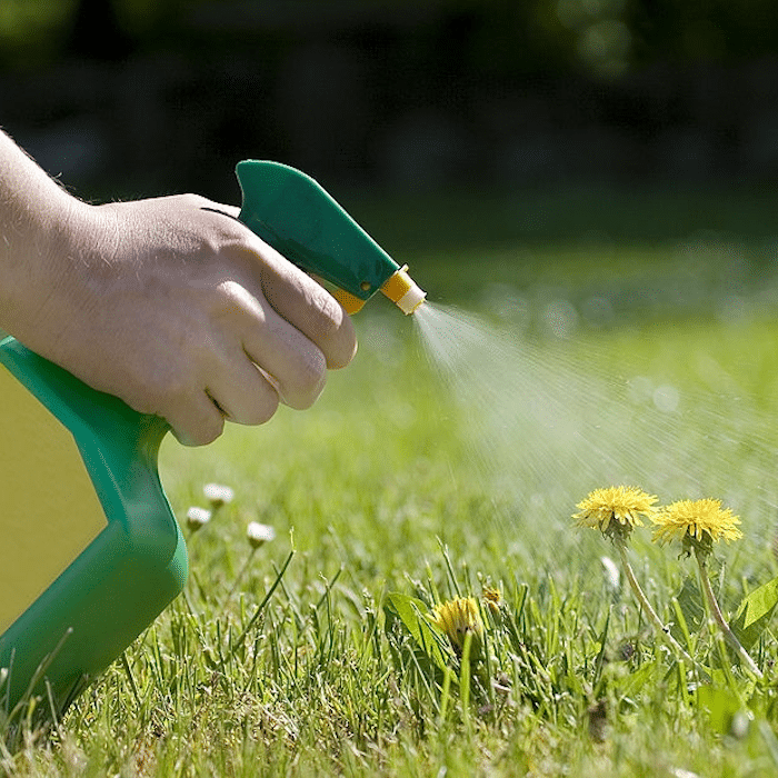We use it in the house all the time.  Now it's time to learn how to use Hydrogen Peroxide in the garden.  Click through NOW to learn more...