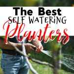 Best Self-Watering Planters