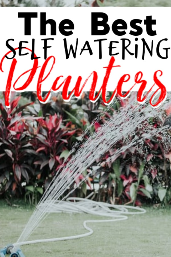 Whether you're planning a day trip,a vacation, or just keep forgetting to water your plants, these self watering containers are the solution.  Click through to see them NOW...
