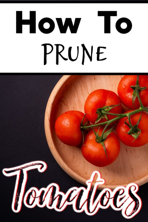 How To Prune Tomato Plants (2)