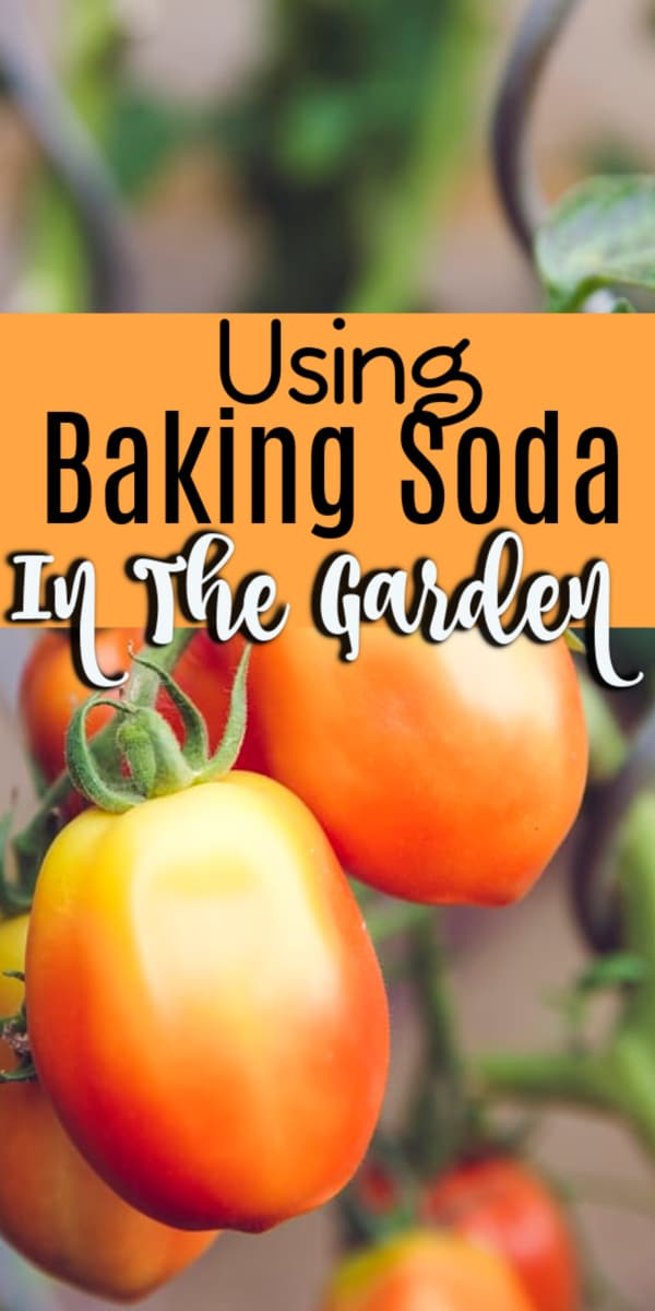 Looking for ways to use more natural solutions in your garden?  Click through NOW to find out how you can use baking soda in your garden...