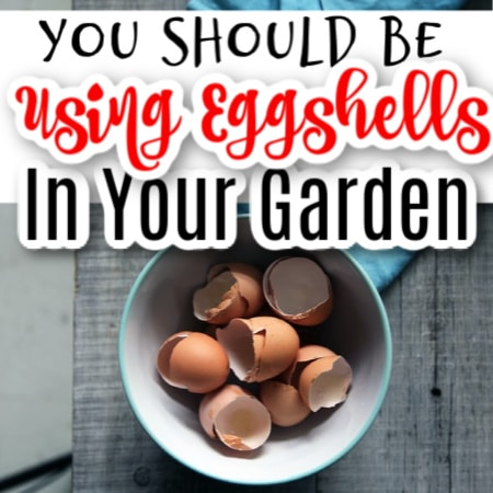 How To Use Egg Shells In The Garden