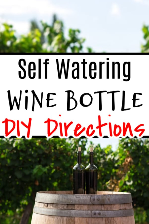 Wine Bottle Watering Ideas (1)
