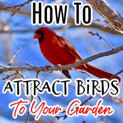How To Attract Birds To Your Garden (1)