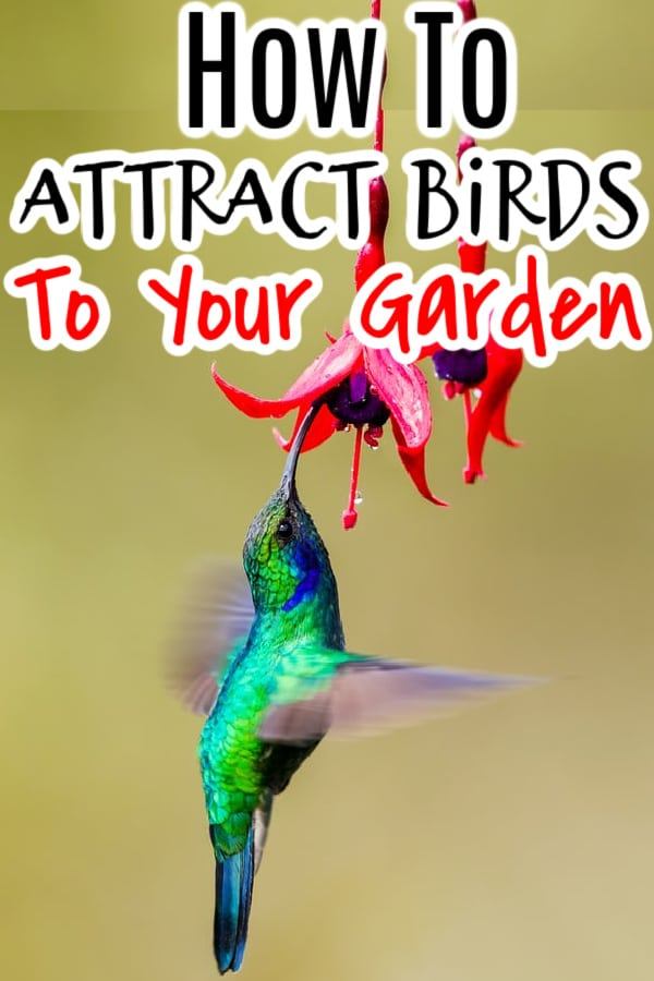 Birds play an integral part in your garden by taking care of insects and even weeds for you.  Making a birds garden helps to attract them, click through NOW to learn more...