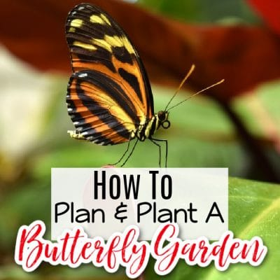 Planning & Planting A Butterfly Garden (1)