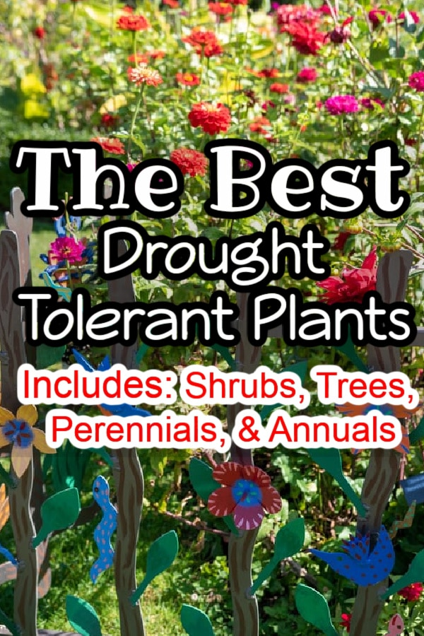 Looking for information on Xeriscaping?  You've come to the right place to find the best drought-resistant and drought-tolerant plants. Click through NOW for more info....
