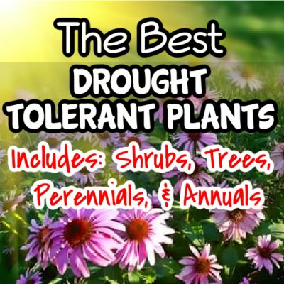 The Best Drought Tolerant Plants: Shrubs, Trees, Perennials, And Annuals