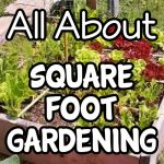 All About Square Foot Gardening (2)