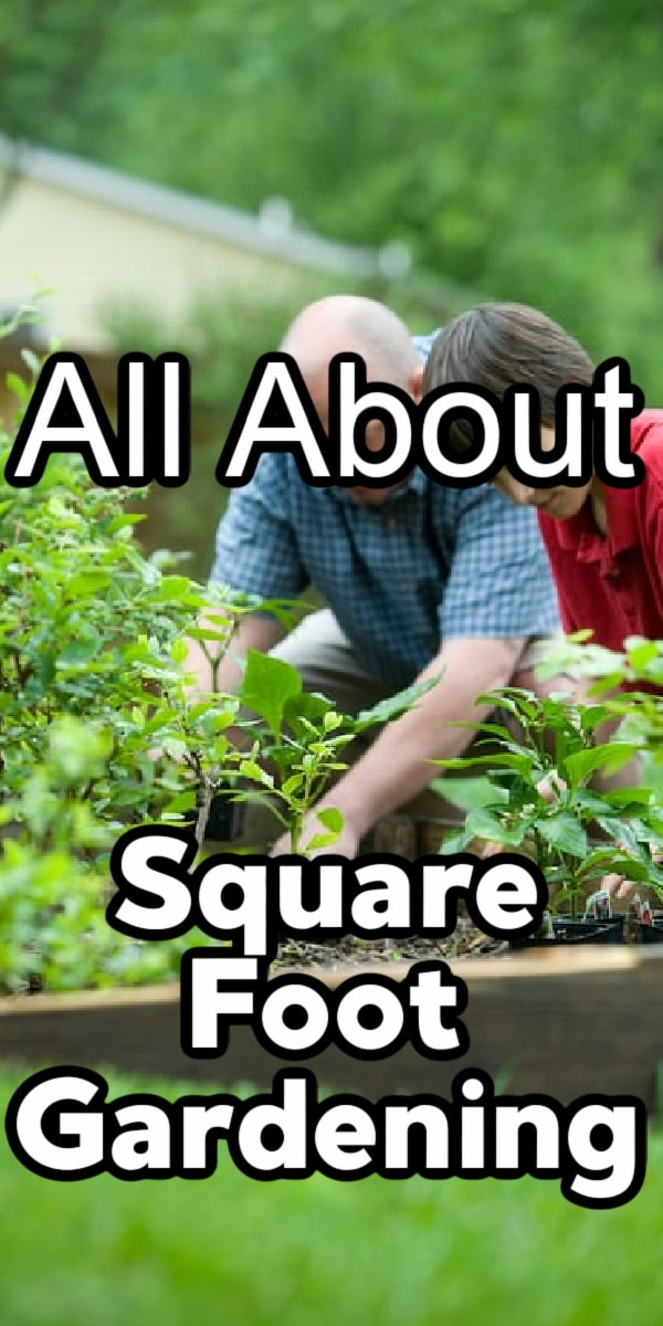 Square foot gardening is very popular because it's so easy to do.  It's great for anyone from a beginner to pro.  Click through NOW to learn more....