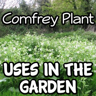 How To Use Comfrey In The Garden