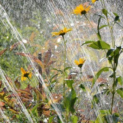 GrowMax Water Super Grow 800